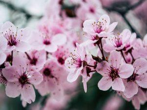 Nature 4 Beautiful Blooming Blossom