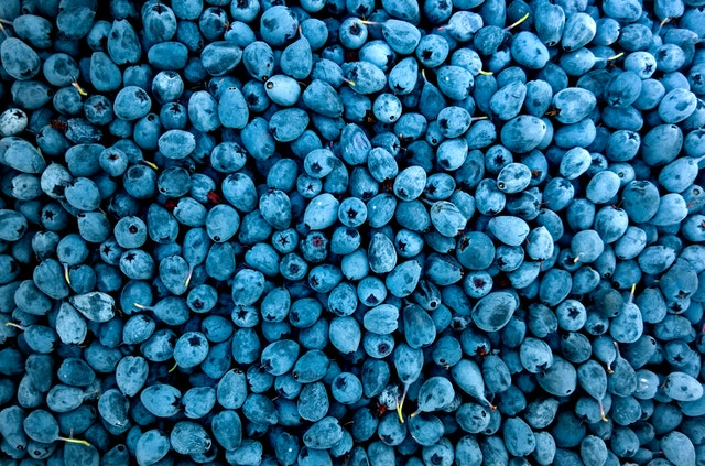Abundance Berries Blueberries