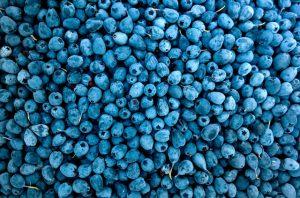 Abundance Berries