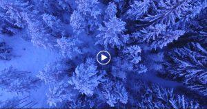 Snowy Trees Free 4K Video