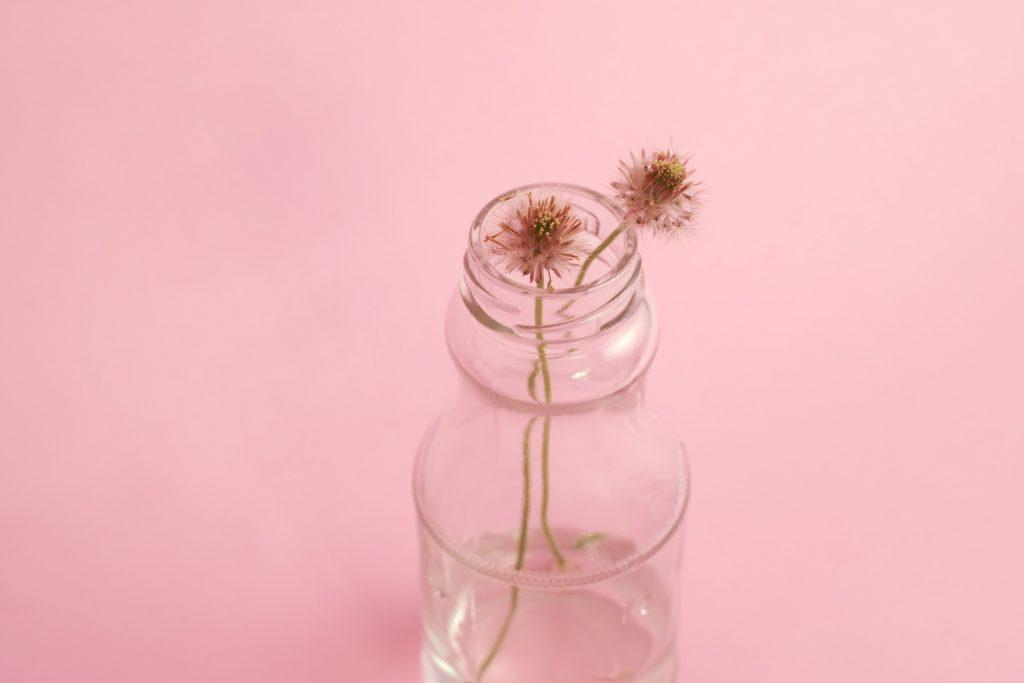 Glass Bottle Plant