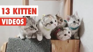 13 Kitten Videos