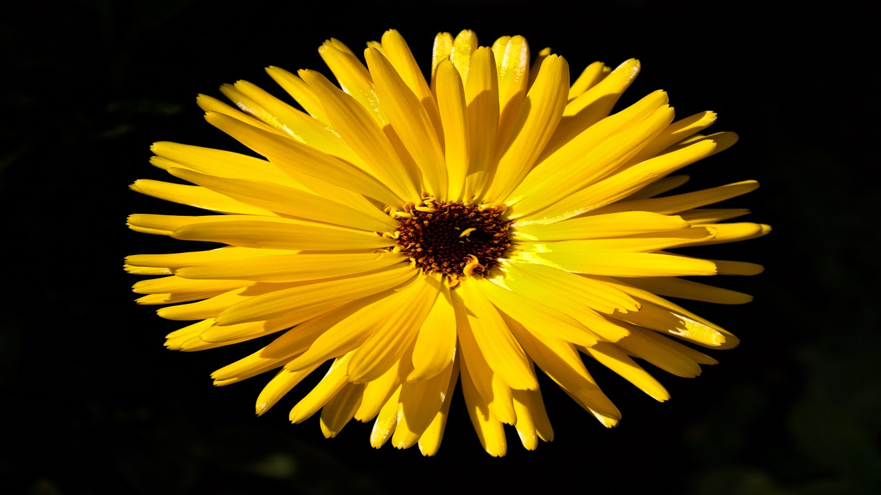 Yellow Bright Flower
