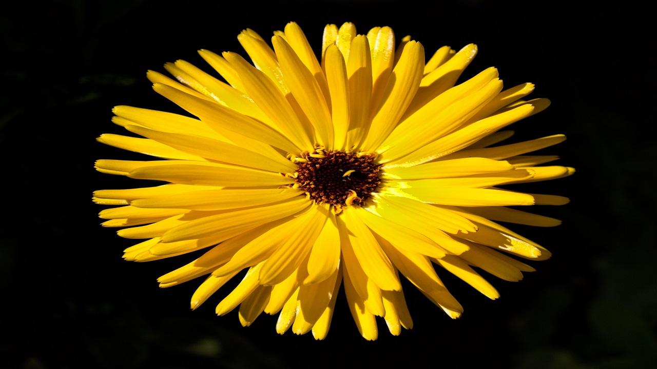 Yellow Bright Flower