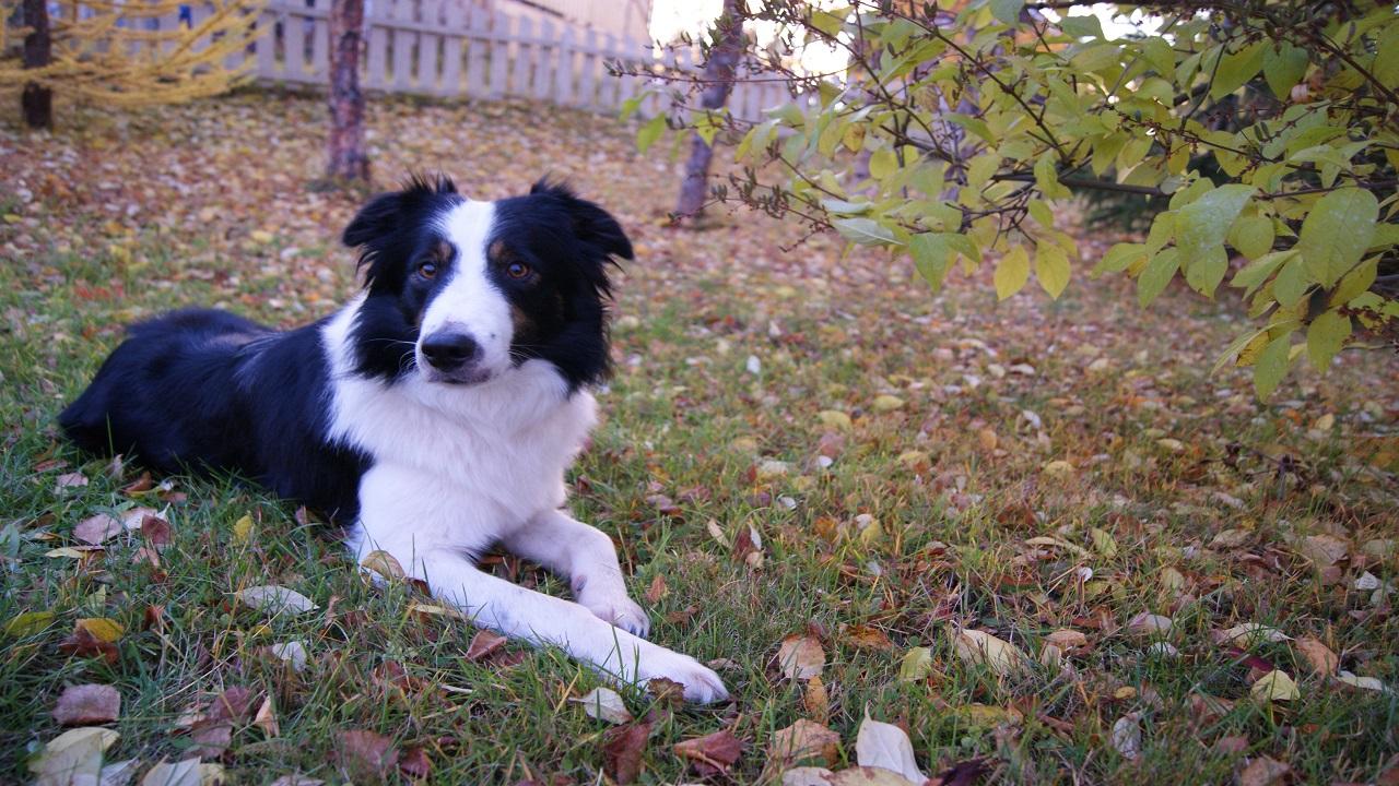 Dog sitting in Garden