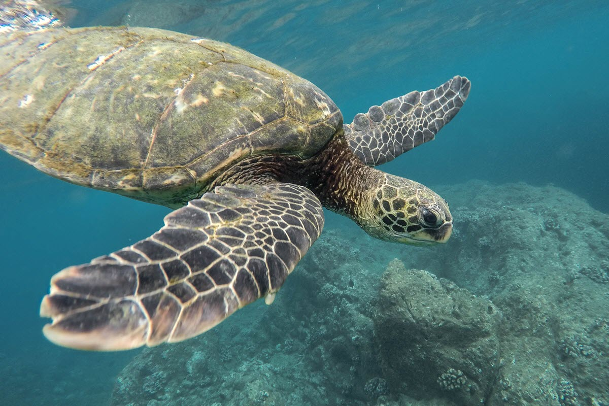 Only 300 species of tortoise are alive today