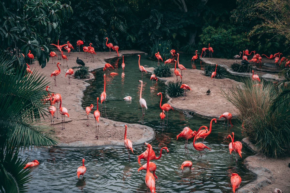 Nature always wears the colors of the spirit!